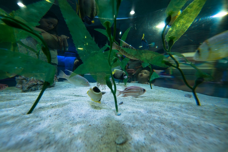 A child looks into a fish tank in the COEX Aquarium May 24, 2014, in Seoul, Republic of Korea. There are over 600 species on display at the aquarium, which is located by the COEX shopping mall. (U.S. Air Force photo by Staff Sgt. Jake Barreiro)
