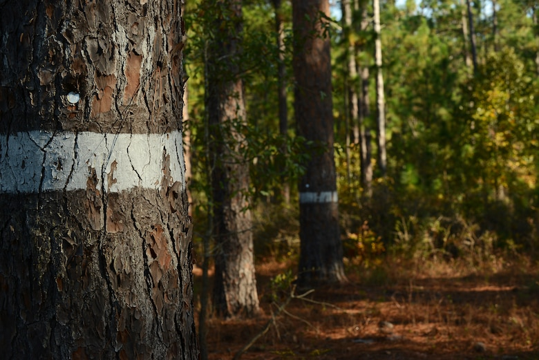 White lines were painted on trees and marked with numbers at Poinsett Electronic Combat Range, Sumter, S.C., Oct. 28, 2014. The white lines signify there is a Red-cockaded Woodpecker, an endangered species, cavity in the tree. (U.S. Air Force photo by Airman 1st Class Diana M. Cossaboom/Released)