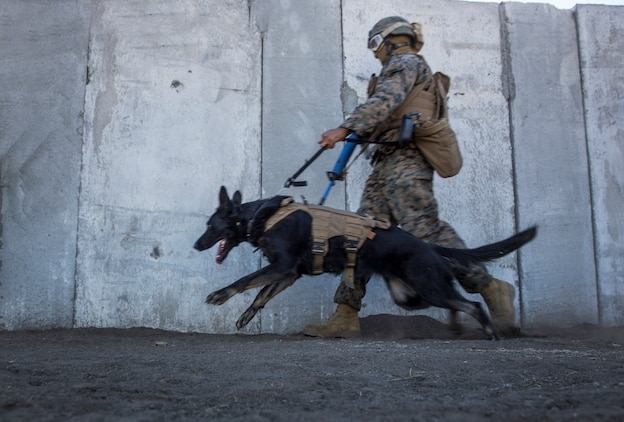 A U.S. Marine with Combat Logistics Battalion 15, 15th Marine Expeditionary Unit, moves into position during a security element course aboard Camp Pendleton, Calif., Nov. 6, 2014. The three-week course is designed to improve the speed and accuracy of the Marines that will make up the maritime raid force's security element when the 15th MEU deploys in the spring. (U.S. Marine Corps photo by Sgt. Emmanuel Ramos/Released)
