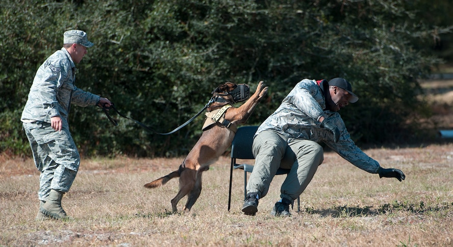 Staff Sgt. Shane Masse, 96th Security Forces Squadron military working dog handler, and his partner, Pako, take down an uncompliant suspect during the Emerald Coast K-9 Clash at Hurlburt Field, Fla., Nov. 15, 2014. Competitors participated in variety of events during the clash, which included searching buildings, navigating a jungle obstacle course and patrolling scenarios. (U.S. Air Force photo/Senior Airman Kentavist P. Brackin)
