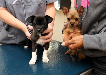 Two puppies receive their vaccinations and an exam Tuesday at the Joint Base San Antonio-Randolph veterinarian clinic. These required vaccinations are given every three to four weeks until puppies are 16 weeks of age. (U.S. Air Force photo by Melissa Peterson)