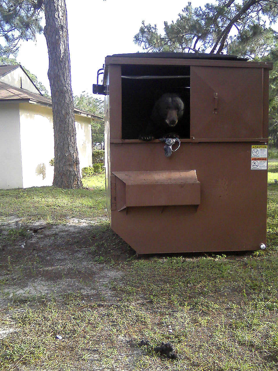 One man s trash another bear s treasure tyndall air for Tyndall afb alloggio cabine