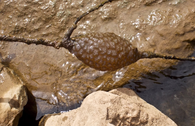 What is that blob in the water? Is it some sort of fish egg?  No.  Maybe it's some sort of frog or salamander egg? No.