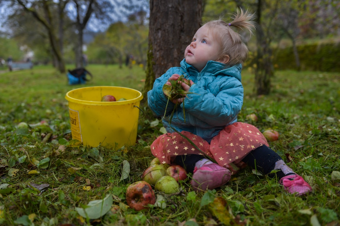 Genevieve Poppel, daughter of Kayla, native of Clovis, N.M., and U.S. Air Force Staff Sgt. Wes Poppel, 52nd Civil Engineer Squadron fire department logistics and native of Urbana, Ohio, helps her parents gather apples at Himmerod Abbeyin Grosslittgen, Germany, Oct. 21, 2014. The deputy area mayor invited Airmen to come to the Abbey for a free lunch cooked by the monks after helping to gather apples for cider. The monks pick and make the ciders annually. (U.S. Air Force photo by Airman 1st Class Kyle Gese/Released)