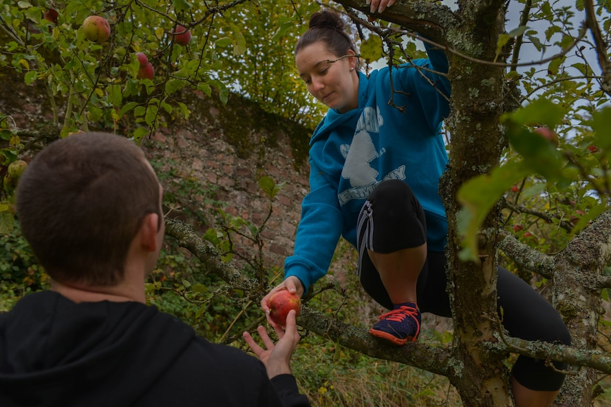 U.S. Air Force Staff Sgt. Jennifer Benning, 52nd Civil Engineer Squadron commander's support staff and native of Texarkana, Texas, picks apples from a tree at Himmerod Abbeyin Grosslittgen, Germany, Oct. 21, 2014. Airmen from Spangdahlem Air Base volunteer regularly in the communities. (U.S. Air Force photo by Airman 1st Class Kyle Gese/Released)
