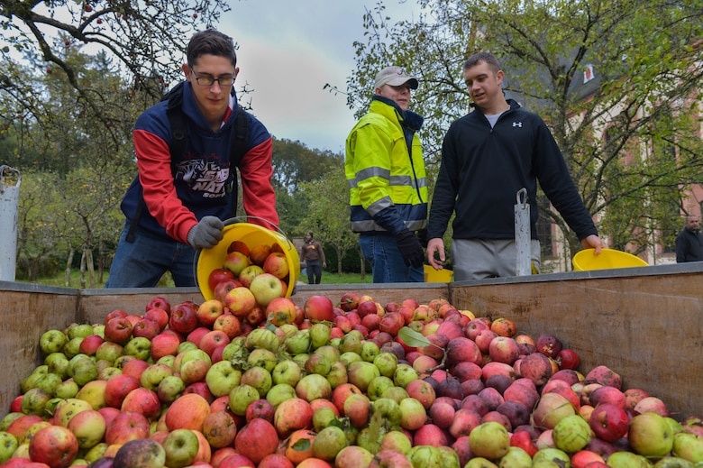 U.S. Air ForceAirman 1st Class IanJerls, left, 52nd Civil Engineer Squadron structural journeyman and native of Scott City, Mo., dumps his bucket of apples into a cart at Himmerod Abbeyin Grosslittgen, Germany, Oct. 21, 2014. The Abbey has approximately 10 monks that make apple cider, honey and other goods using the resources from the land. (U.S. Air Force photo by Airman 1st Class Kyle Gese/Released)