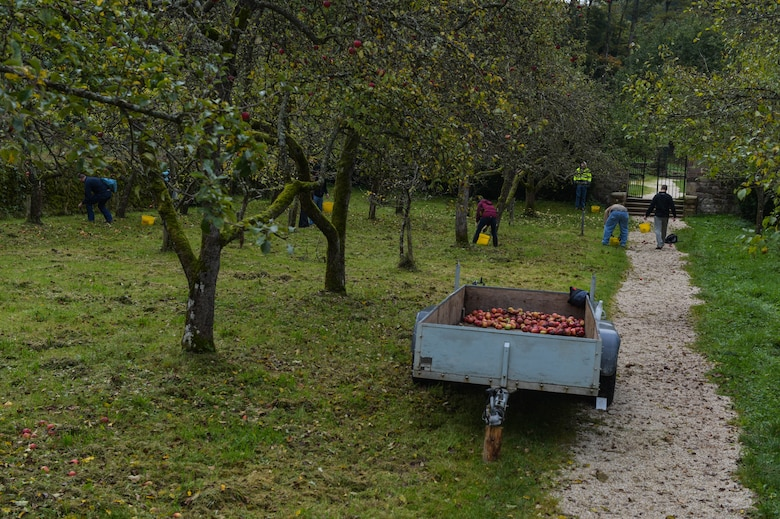 U.S. Air Force Airmen from the 52nd Civil Engineer Squadron pick apples at Himmerod Abbey in Grosslittgen, Germany, Oct. 21, 2014. Approximately 40 base members volunteered to assist the monks with picking apples. The monks use the fruits for many products, ranging from apple juice to apple wine. (U.S. Air Force photo by Airman 1st Class Kyle Gese/Released)
