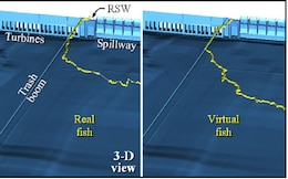 "Comparison of fish ""agent"" with real fish"