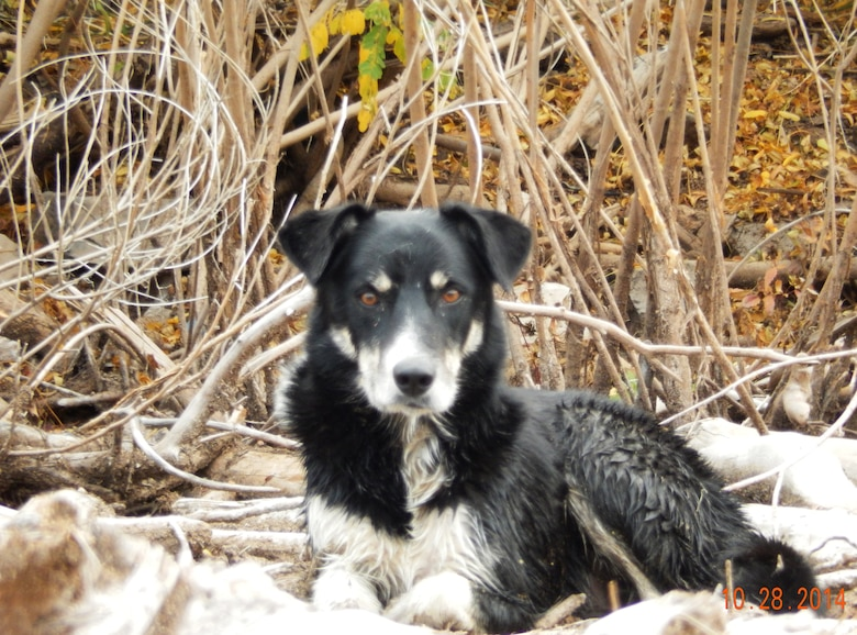 COCHITI LAKE, N.M., -- One of the dogs that was rescued Oct. 28, by Cochiti park rangers.
