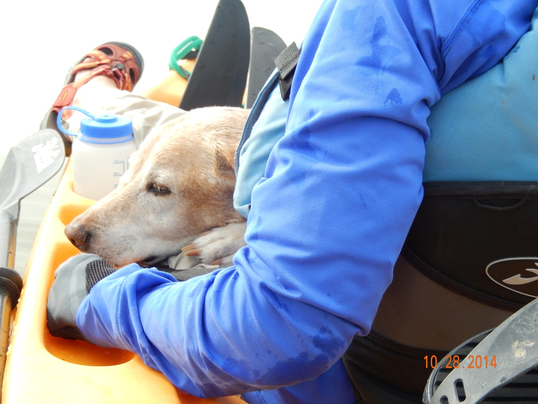 COCHITI LAKE, N.M., -- One of the dogs that was rescued by park rangers here Oct. 28.