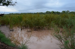 Native willows in a flooded willow swale; this is one of the features of the Middle Rio Grande Restoration Project.