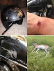 The photos reveal the scrapes where the rider's helmet struck the asphalt and road rash to the rider's right wrist, the bottom left photo reveal some of the damage to his prized motorcycle as well as the unfortunate deer, which made it to the tall grass just beyond the side of the road before succumbing to its injuries. (Courtesy photos by Maj. Jason Ross)