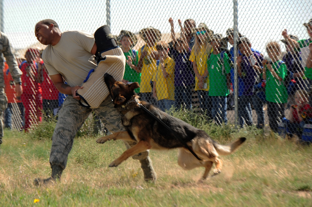 """Children watch a bite demonstration and are taught the important role of military working dogs during the Operation Future Forces event Sept. 13, 2014, at Camp Rattlesnake on Buckley Air Force Base, Colo. During OFF, children were given the chance to experience what a military member endures from """"Basic Military Training"""" to a mock deployment. (U.S. Air Force photo by Airman 1st Class Samantha Saulsbury/Released)"""