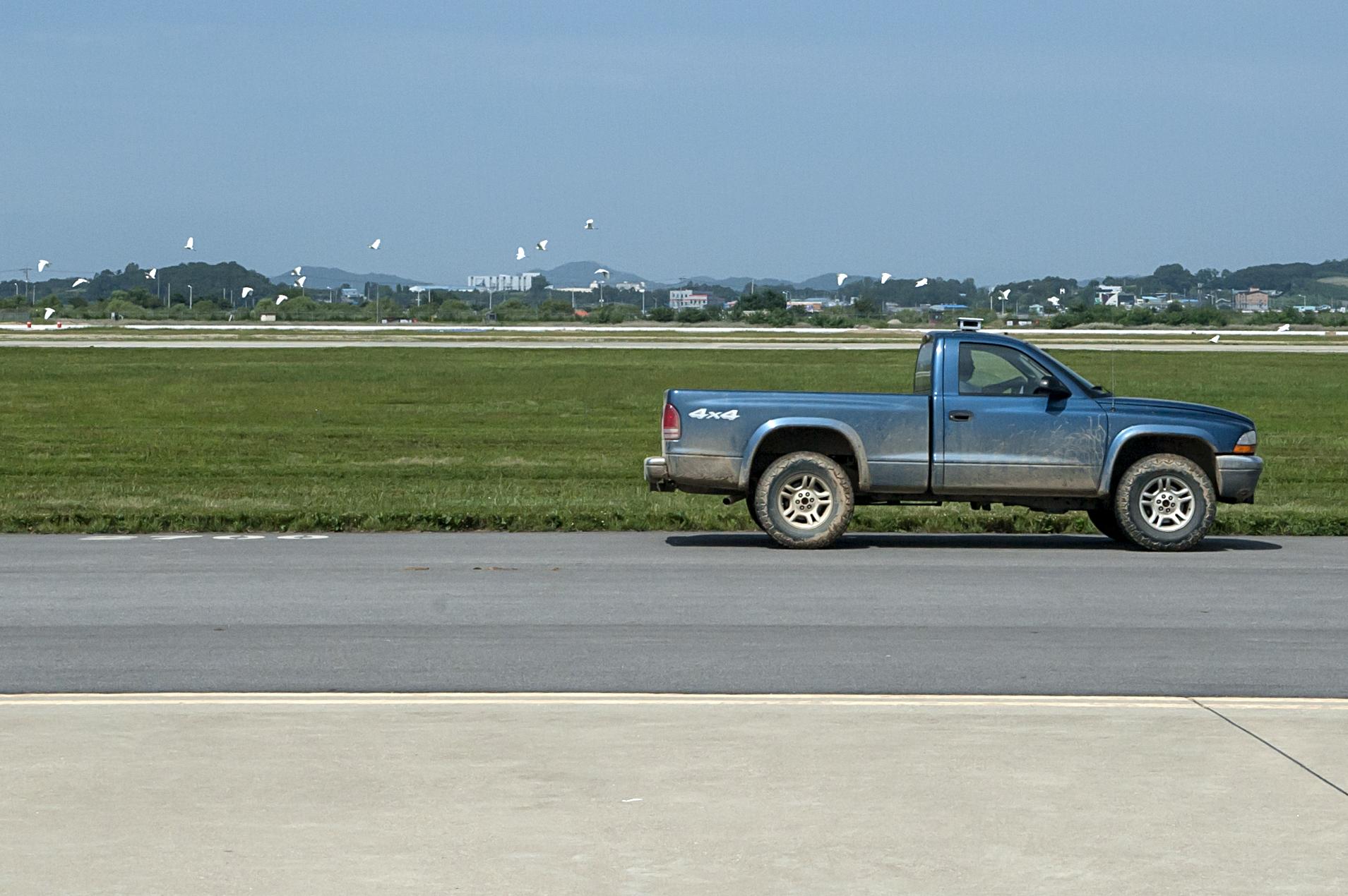 BASH program keeps birds off airfield > Osan Air Base > News