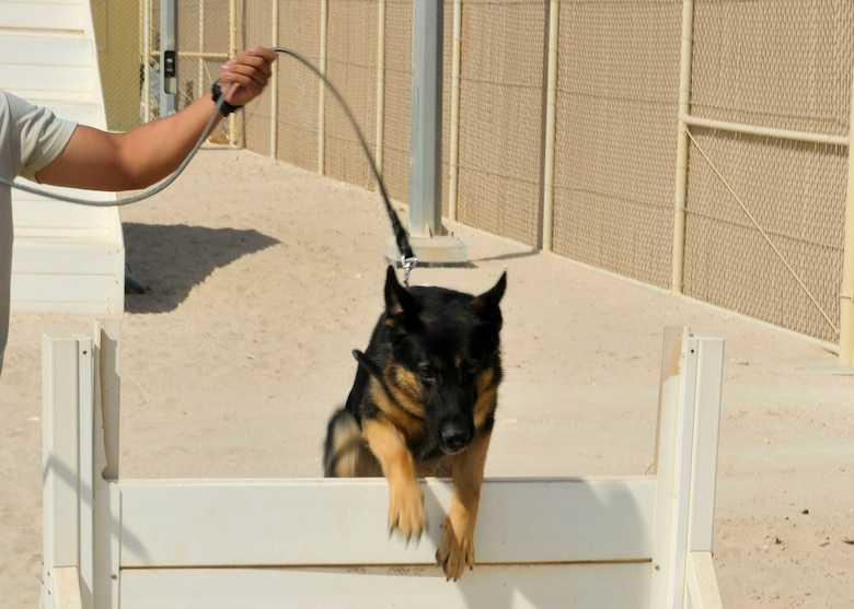 Renato a 3-year-old military working dog with the 379th Expeditionary Security Forces Squadron, jumps over an obstacle during training at Al Udeid Air Base, Qatar, Sept. 24, 2014. Military working dogs serve as a psychological deterrent and are trained to attack on command. (U.S. Air Force photo by Senior Airman Colin Cates)