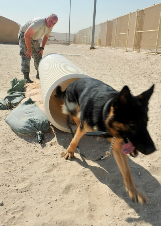 Military working dog, Renato, runs through a tunnel under the instruction of U.S. Air Force Tech. Sgt. Sean Schwartz, 379th Security Forces Squadron K-9 handler at Al Udeid Air Base, Qatar, Sept. 24, 2014. Military working dogs continuously train even in deployed locations, to maintain standards with all their movements. (U.S. Air Force photo by Senior Airman Colin Cates)