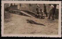 Alligator kept by World War II era Marines on Parris Island.