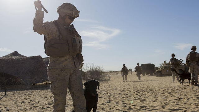 A Marine with 1st Law Enforcement Battalion, I Marine Expeditionary Force, prepares to commence directed seek and receive drills during Exercise Desert Scimitar 2015 aboard Marine Corps Air Ground Combat Center Twentynine Palms, California, April 9, 2015. Desert Scimitar enables 1st Marine Division to test and refine its command and control capabilities while providing the opportunity for supporting units to hone essential warfighting skills.