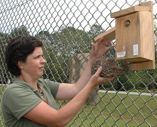 Marine Corps Logistics Base Albany's Natural Resource Manager Julie Robbins examines a bluebird nest from a bluebird box during a bird box survey, April 13.