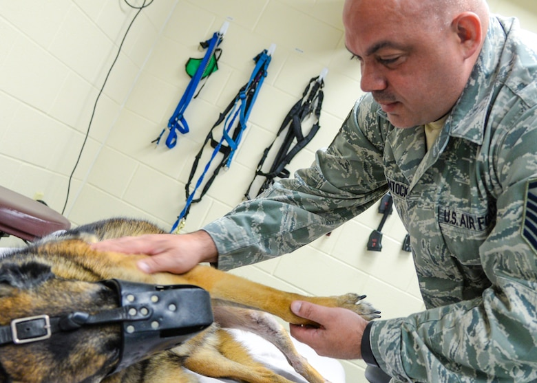 Master Sgt. Sean McClintock, NCO in charge of the 59th Medical Wing Orthotic Lab, greets Military Working Dog SStash at the Holland Military Working Dog Hospital on Joint Base San Antonio-Lackland, Texas, April 2, 2015. McClintock modified a leg brace so that SStash could start walking again. (U.S. Air Force photo / Staff Sgt. Michael Ellis)