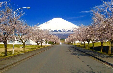 Warm weather brings a great change in scenery of Mt. Fuji and the cherry blossom trees aboard CATC Camp Fuji.