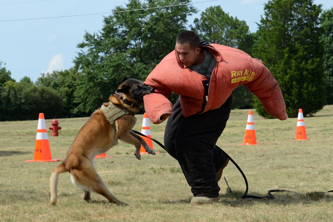 Dog Training School Mwd