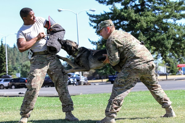 Army Staff Sgt. Adam Serella, right, and Army Spc. Bruce Brickleff, both military working dog handlers with the 95th Military Police Detachment, demonstrate the focus and strength of Serella's new MWD, Greco, by lifting him off the ground while he continues working on his bite during a training session at Joint Base Lewis-McChord, Wash., July 29, 2015. U.S. Army photo by Staff Sgt. Patricia McMurphy