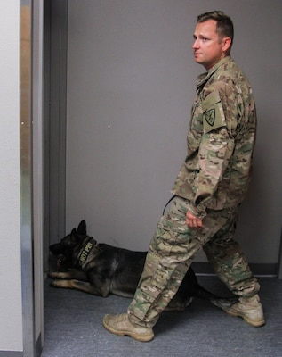Army Staff Sgt. Adam Serella, a military working dog handler with the 95th Military Police Detachment, looks for confirmation of a correct alert by his MWD, Greco, during training at Joint Base Lewis-McChord, Wash., July 29, 2015. U.S. Army photo by Staff Sgt. Patricia McMurphy