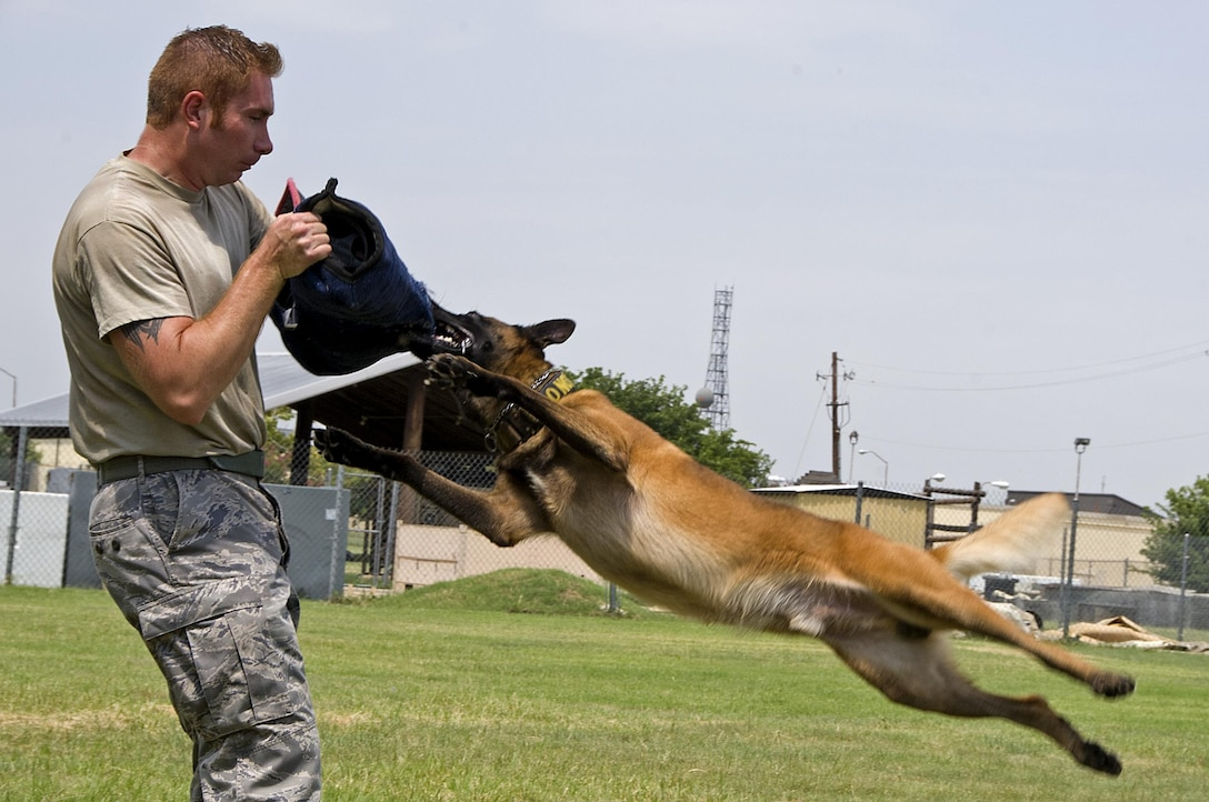 Tech. Sgt. Shawn Rankins and military working dog Eespn demonstrate aggression training Aug. 4, 2015, at Sheppard Air Force Base, Texas. Aggression training keeps the working dogs proficient on protecting their handler and other personnel from dangerous suspects while conducting routine police work. Rankins and Eespin are assigned to the 82nd Security Forces Squadron. (U.S. Air Force photo by Danny Webb)
