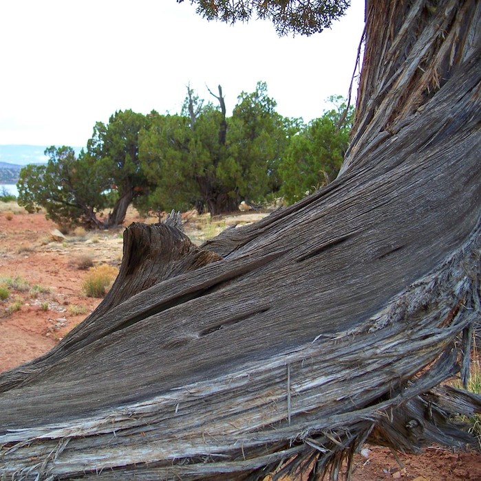 ABIQUIU DAM, N.M. -- Tree trunk at the dam. Photo by Maj. Andre Balyoz, May 30, 2009.