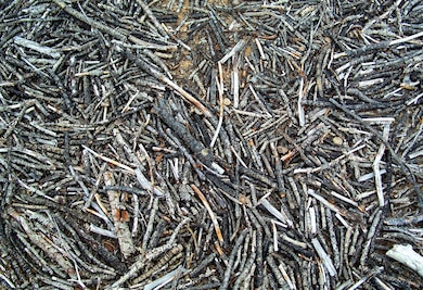Sticks at Abiquiu Lake, May 30, 2009. Photo by Maj. Andre Balyoz.
