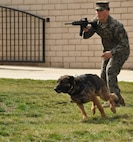 Cpl. Francis Mulcare, military working dog handler, 1st Law Enforcement Battalion, Camp Pendleton, orders his military working dog to engage a simulated enemy combatant during a demonstration at March Field Air Museum on Feb. 21, 2015. The 15th Annual War Dog Remembrance Day honors the sacrifices military working dogs and their handles made during battle while also illustrating the strong bond forged between the two. (U.S. Air Force photo/Senior Airman Russell McMillan)