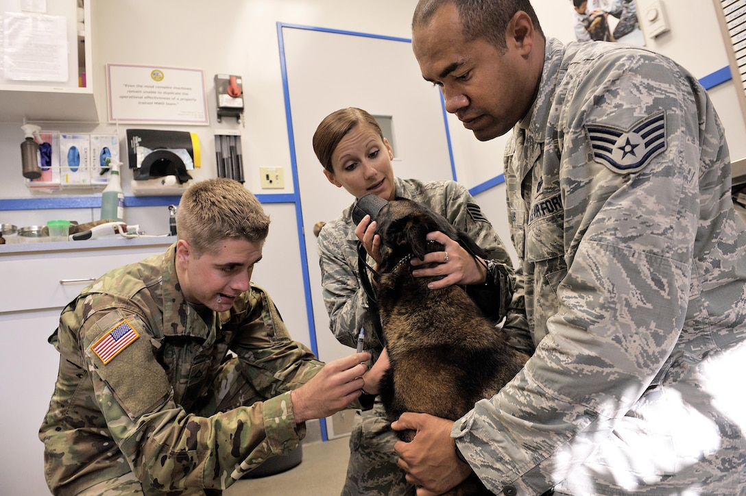 Army Pfc. Richard Schmidt, a veterinary technician at Public Health Command District-Japan's Okinawa branch, prepares to administer a shot to Ayila, an 18th Security Forces Squadron military working dog, while 18th SFS MWD handlers comfort her during an annual dental examination Dec. 9, 2015, at the veterinary  treatment facility on Kadena Air Base, Japan. MWD dental examinations are recommended at least once a year to ensure they remain healthy. (U.S. Air Force photo/Naoto Anazawa)