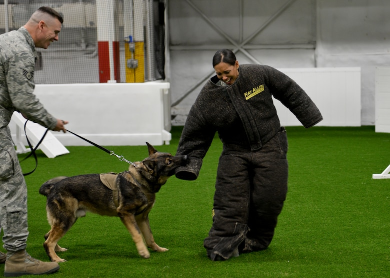 Chief Master Sgt. Sonia Lee, 28th Bomb Wing command chief, participates in a military working dog training scenario at Ellsworth Air Force Base, S.D., Dec. 18, 2015. As command chief, Lee is presented with many opportunities to meet and learn how base personnel accomplish the mission. (U.S. Air Force photo by Senior Airman Anania Tekurio/Released)