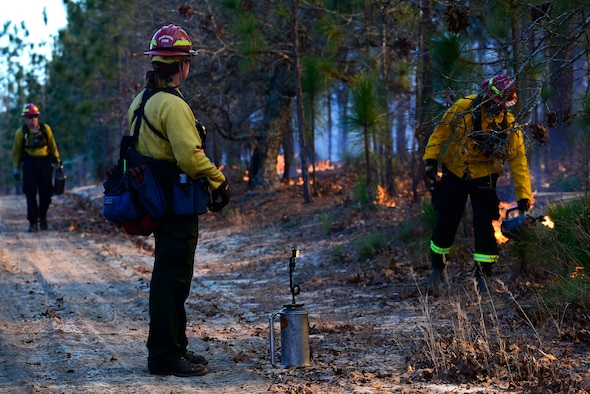 Members of the prescribe burn team light fires on the forest floor during prescribed burning at Poinsett Electronic Combat Range, Sumter, S.C., Jan. 28, 2015. The team was scheduled to burn throughout the week while the weather permitted. (U.S. Air Force photo by Airman 1st Class Diana M. Cossaboom/Released)
