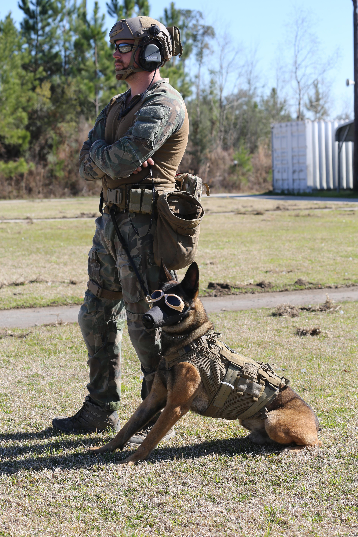 Black Dog Special Forces