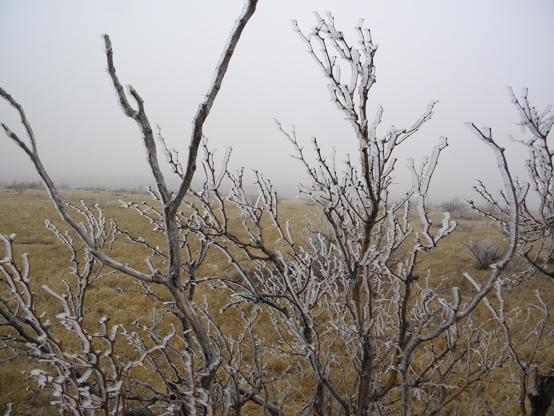 "2014 District Photo Drive entry. Photo by Barry Easter, Feb. 10, 2014.  ""Plants glisten as a glaze of ice coats them near Two Rivers Dam, N.M."""