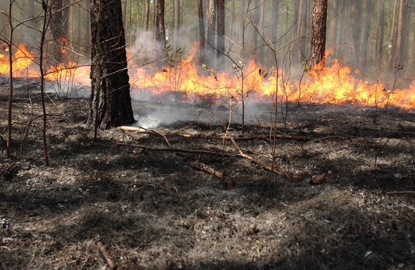 The key to prescribed burning is control…control achieved by carefully choosing the time and conditions under which the burn is conducted.  Uncontrolled wildfire can be one of nature's most destructive forces destroying timber, burning homes and infrastructure, killing wildlife and causing human deaths.  Properly conducted, control burns do not kill trees that have grown beyond the seedling stage.  They burn along the forest floor with flames rarely rising higher than three to six feet from the ground. (Courtesy photo)