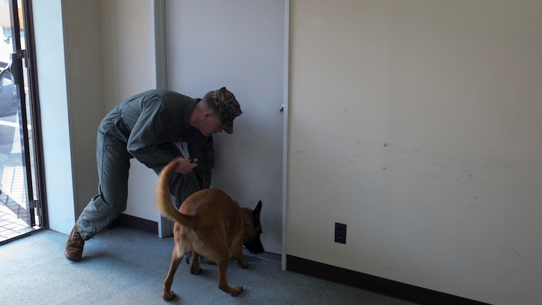 Cpl. Nickolaus Hess, a military working dog handler with the Provost Marshal's Office, commands Azra, Hess' military working dog, to sniff the bottom of the door during building clearing training, Jan. 12, 2015, aboard Marine Corps Air Station Iwakuni, Japan. Military working dogs use their sense of smell to find suspicious substances or suspects.