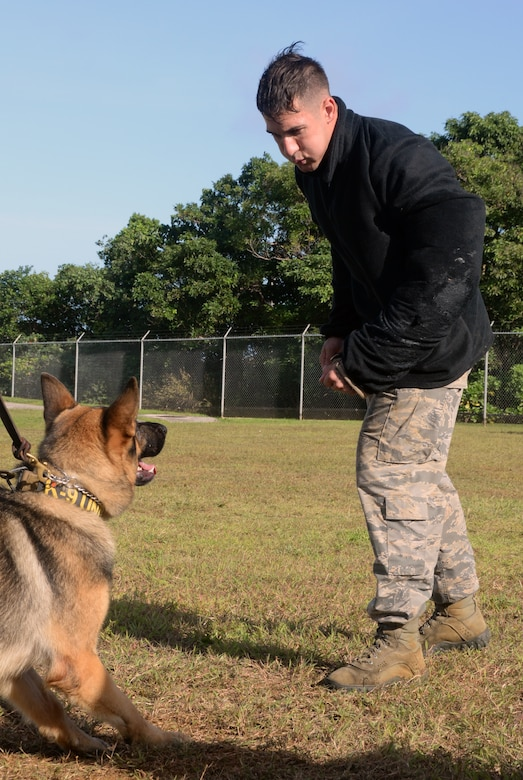 Staff Sgt. Michael Hensley, 36th Security Forces Squadron military working dog handler, challenges Johny, 36th SFS military working dog, during advanced decoy training Dec. 16, 2014, at Andersen Air Force Base, Guam. Hensley is wearing a hidden hard sleeve causing Johny to focus more on the threat and not the standard gear used during training. (U.S. Air Force photo by Senior Airman Amanda Morris/Released)