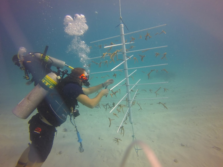 "In a joint effort with Jacksonville District, a team of NOAA divers later relocated corals from the Miami Harbor to a nursery site.  The port is one of two Jacksonville District projects included in the administration's ""We Can't Wait"" initiative"