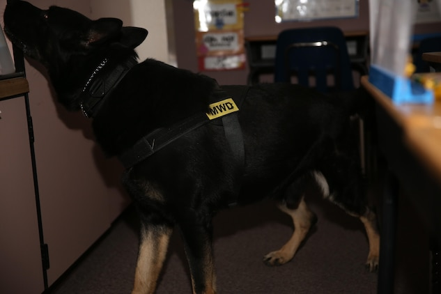 Bono, military working dog, K9 unit, Provost Marshal's Office, searches for simulated bomb threats at Condor Elementary School as part of night training Dec. 9, 2014. The dogs are praised every time they find an objective during training. (Official Marine Corps photo by Lance Cpl. Thomas Mudd/ Released)