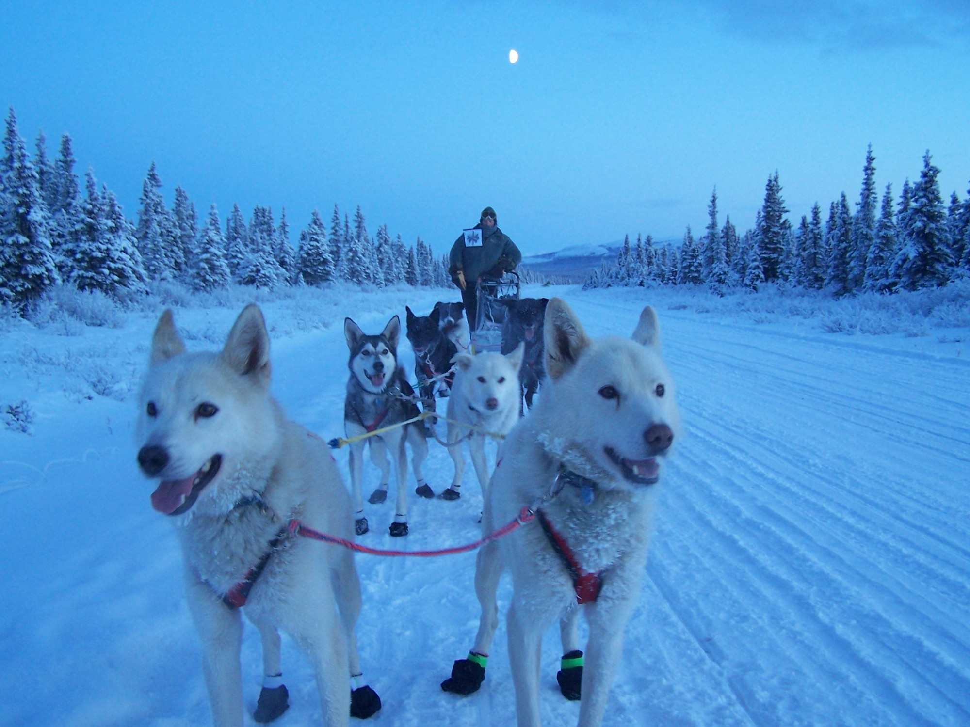 Maj. Roger Lee practices with his sled dogs for the Iditarod Trail Sled Dog Race in Alaska. Lee hopes to qualify for this year's race of more than 1,000 miles from Anchorage to Nome, Alaska.  Lee is a 60th Aerospace Medicine Squadron bioenvironmental engineering operations officer. (Courtesy photo)