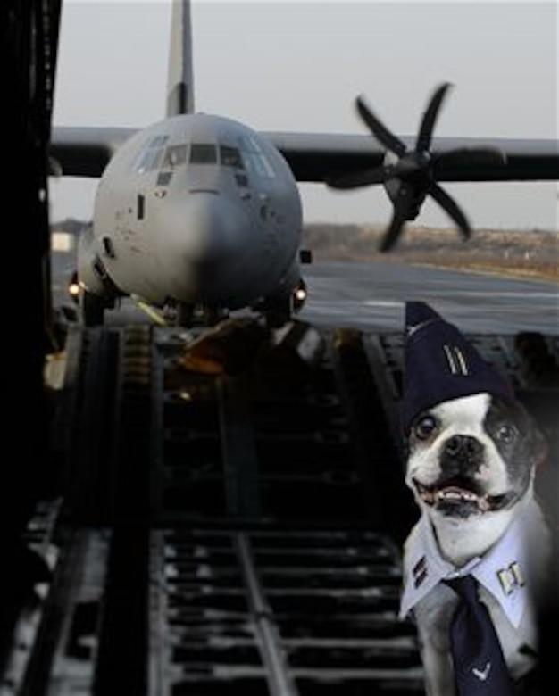 Capt. Spanky flies high this week in a C-130J Super Hercules. (U.S. Air Force Graphic)