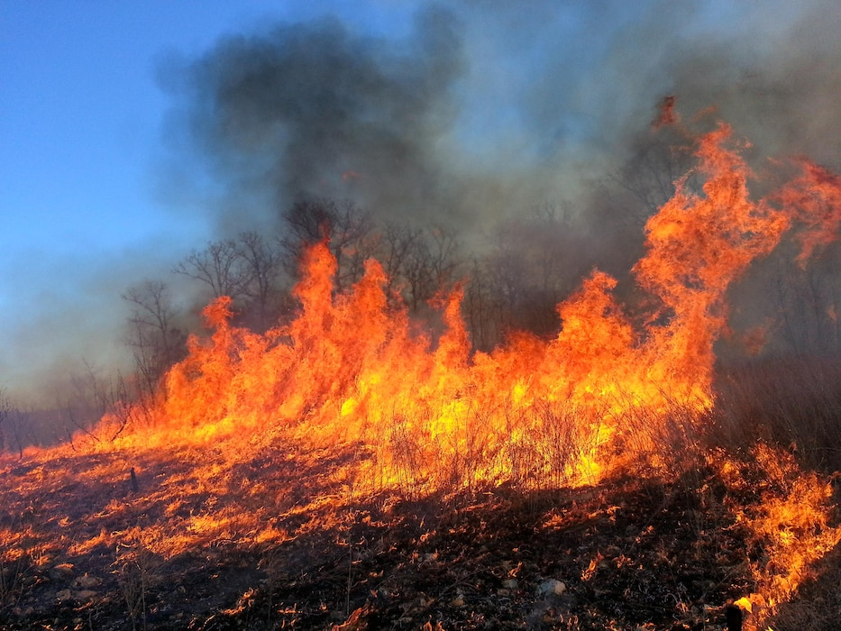 Controlled burn in a park area