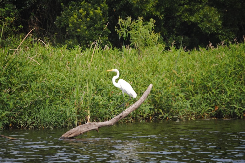 A white egret sits along the banks of a restored portion of the Kissimmee River near Lorida, Fla. The U.S. Army Corps of Engineers Jacksonville District hope to complete restoration of 44 miles of the historic river channel by 2019.