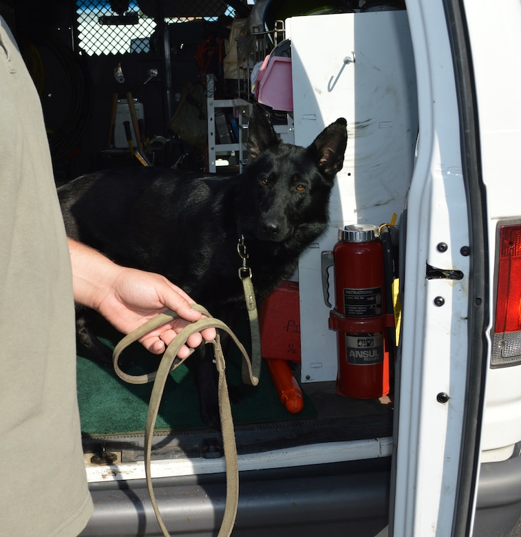 Aggie searches a vehicle at the front gate on July 16, 2015, at Stratton Air National Guard Base, New York. Tech. Sgt. Scott Everson, a loadmaster with the 139th Airlift Squadron, works as a K-9 handler in a private security company on the civilian side with Aggie, an explosive detection K-9. Everson was given approval by 109th Airlift Wing leadership to train Aggie at the base, giving the 109th Security Forces Squadron an added measure of security at the front gate. Aggie will be assisting with random vehicle inspections over the next few months while at the same time receiving real-world training. (U.S. Air National Guard photo by Tech. Sgt. Catharine Schmidt/Released)