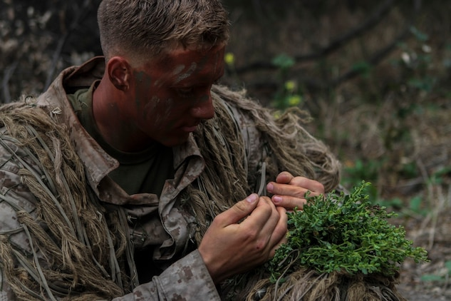 A Marine with 1st Marine Division, 7th Marine Regiment camouflages himself with vegetation while participating in stalking training aboard Marine Corps Base, Camp Pendleton, Calif., May 27, 2015. The training was the last event during Division School's 6-week-long Pre-Scout Sniper Course. (Photo by LCpl. Danielle Rodrigues/Released)