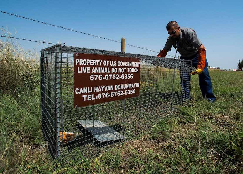 Battal Kocahan, 39th Civil Engineer Squadron pest management employee, sets up a trap to catch stray animals June 9, 2015, at Incirlik Air Base, Turkey. Some of the pesky insects and critters that call IAB their home are mosquitoes, ants, ticks, wasps, spiders, snakes and stray animals. (U.S. Air Force photo by Airman 1st Class Cory W. Bush/Released)
