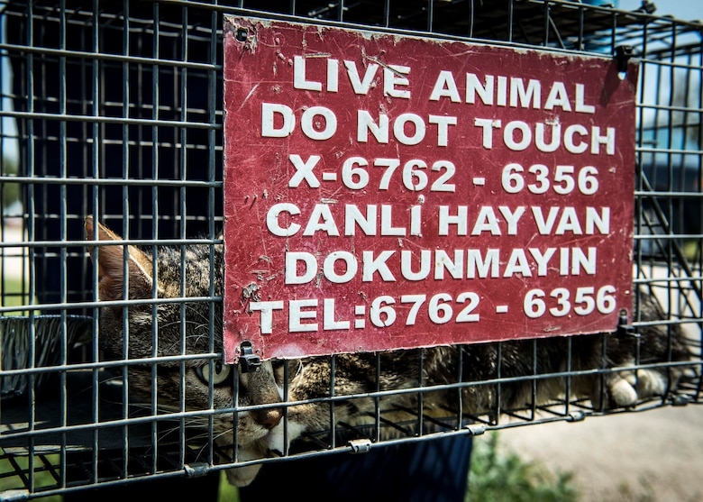 A cat sits in a cage after being caught June 9, 2015, at Incirlik Air Base, Turkey. The 39th Civil Engineer Squadron pest management office catches stray animals and tags them with a serial number to monitor population growth and decline on base. (U.S. Air Force photo by Airman 1st Class Cory W. Bush/Released)